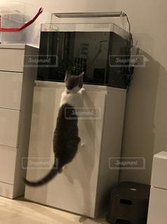 水槽に飛びつく猫 - No.1172268