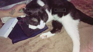 カーペットの上で横になっている黒い猫の写真・画像素材[1175830]