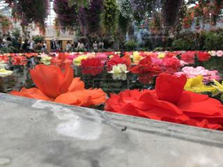 水面に咲く花 なばなの里の写真・画像素材[1172753]