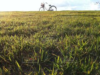 河川敷の自転車の写真・画像素材[1173175]
