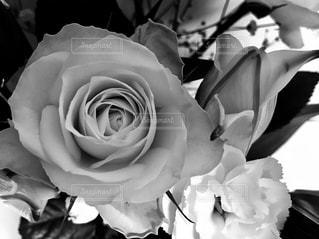 近くの花のアップの写真・画像素材[1172872]