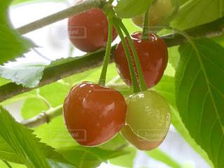 近くに果物のの写真・画像素材[1173004]