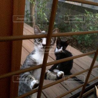 ケージの上に座っている猫の写真・画像素材[1177686]