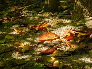 草の上に座ってピザ カバー フィールドの写真・画像素材[1468675]
