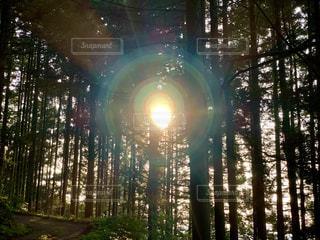 杉林の写真・画像素材[2325770]