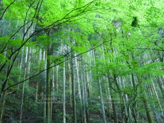 夏の森の写真・画像素材[2325827]