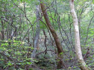 森の風景の写真・画像素材[2325928]