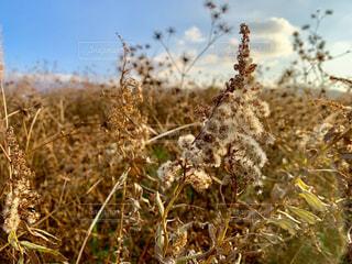 秋の草の写真・画像素材[2382104]