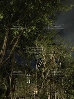 夜の森と館の写真・画像素材[1173236]