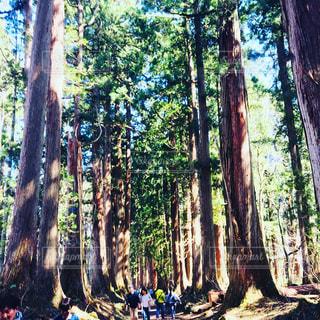 森の人々 のグループの写真・画像素材[1173283]