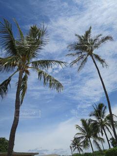 ヤシの木とビーチ - No.1173299