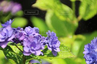近くの植物に紫の花のアップの写真・画像素材[1229948]