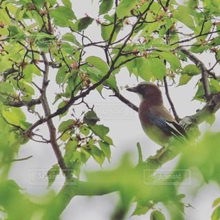 木の枝にとまる小鳥の写真・画像素材[1174173]