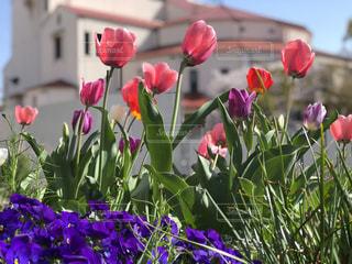 鮮やかな春の写真・画像素材[1743433]