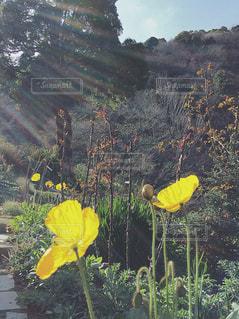 黄色の花の写真・画像素材[1176035]