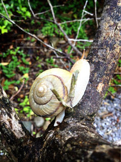 木の枝の上に座ってカタツムリの写真・画像素材[1229804]