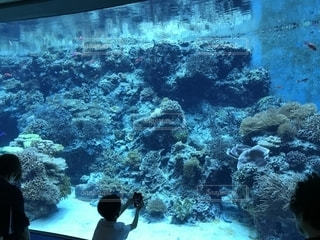 美ら海水族館 大水槽の写真・画像素材[1176910]