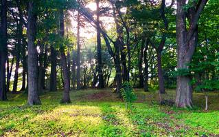 緑豊かな森の真ん中の木の写真・画像素材[1177056]