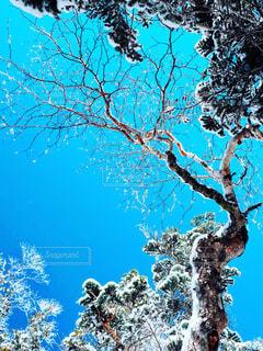 木のクローズアップの写真・画像素材[3042021]