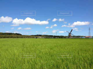 大規模なグリーン フィールドの写真・画像素材[1177814]