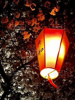 夜桜の写真・画像素材[1180787]