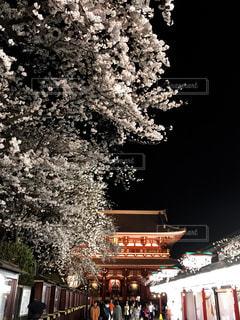 浅草寺の夜桜の写真・画像素材[1180788]