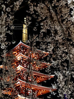 夜桜の写真・画像素材[1180789]