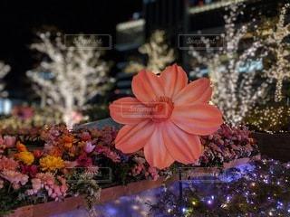花のクローズアップの写真・画像素材[3526290]