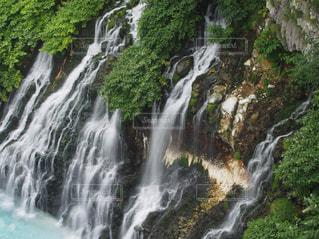 夏の白ひげの滝の写真・画像素材[1518330]