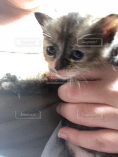 かわいい子猫の写真・画像素材[1183167]