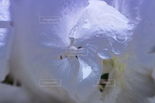 近くの花のアップの写真・画像素材[1220615]