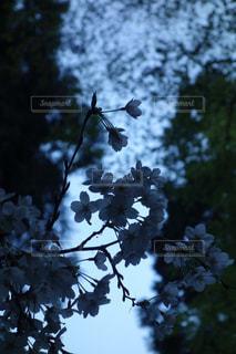 木の枝にとまった鳥の写真・画像素材[1220619]