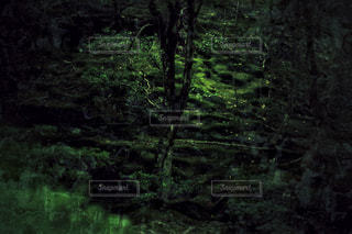 緑豊かな緑の森の写真・画像素材[1180063]