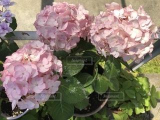 近くの花のアップの写真・画像素材[1195348]