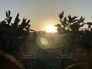 朝日が昇るの写真・画像素材[1180527]