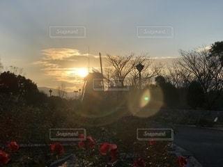 日没の前にトラフィック ライトの写真・画像素材[1180611]