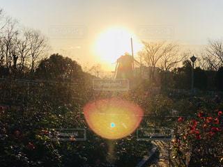 バラ風車の写真・画像素材[1180759]