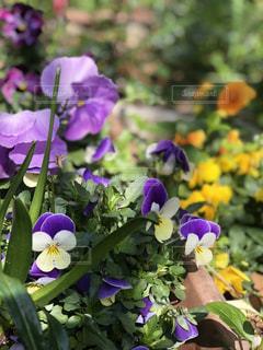 可愛いお花の写真・画像素材[1180799]