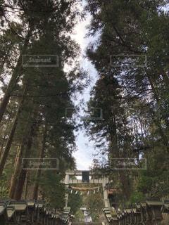 木と空と鳥居の写真・画像素材[1180805]