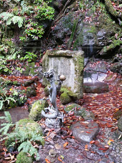 クローズ アップ庭園のの写真・画像素材[1181373]