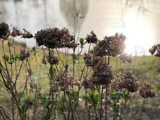 木の花の花瓶の写真・画像素材[1181460]