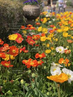 フラワー ガーデンの写真・画像素材[1181462]