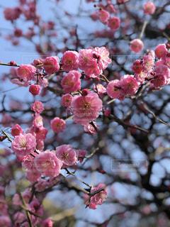 花の写真・画像素材[1181466]