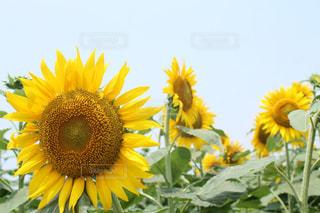夏のひと時の写真・画像素材[1180158]