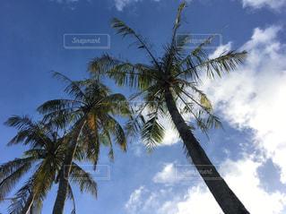 夏の空の写真・画像素材[1227239]