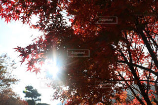 近くの木のアップの写真・画像素材[1180684]