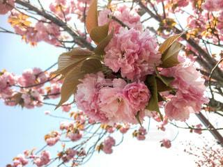 近くの花のアップの写真・画像素材[1182984]
