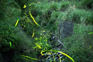 黄色と緑の草の写真・画像素材[1210051]