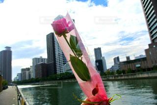 一輪の花をもらったシーンは記念日。卒業式や結婚記念日、プロポーズ、どんなシーン?の写真・画像素材[1187398]