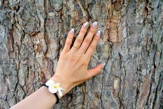 木の壁に手を当ててパワーをの写真・画像素材[1187850]